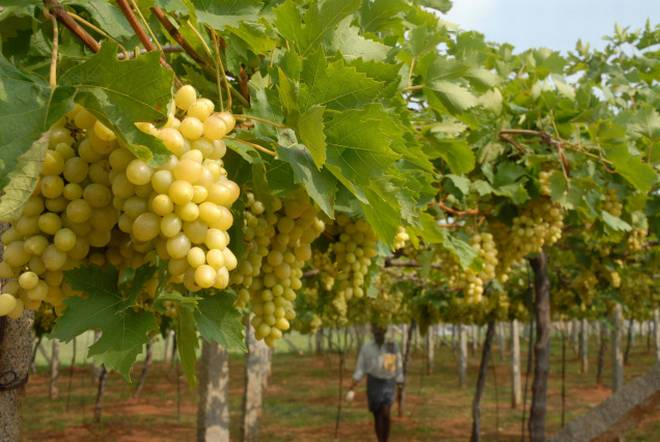 Grover Vineyards inBangalore